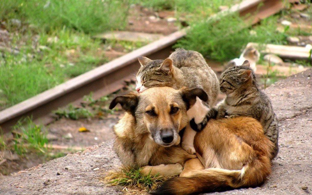 7 самых лучших пород собак для ленивых хозяев