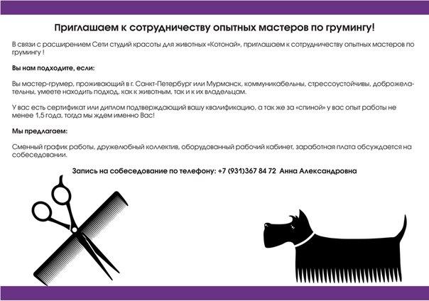Виды стрижек у собак: гигиеническая, модельная, креативная, выставочная