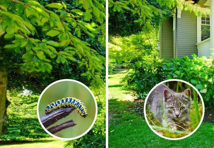 Как кошки видят наш и потусторонний мир, чем кошачье зрение отличается от зрительного восприятия людей?