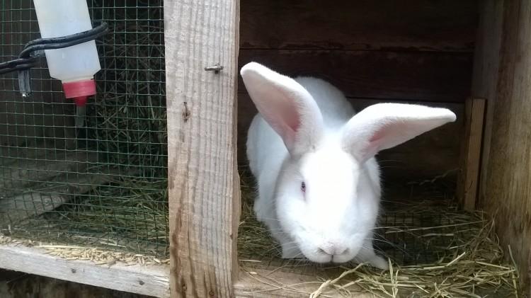 Разведение кроликов в домашних условиях как бизнес — с чего начать
