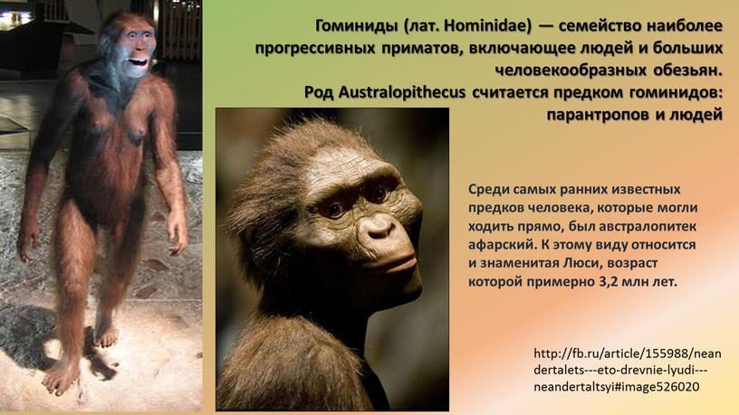 Высшие приматы - представители, отряд высших плацентарных млекопитающих