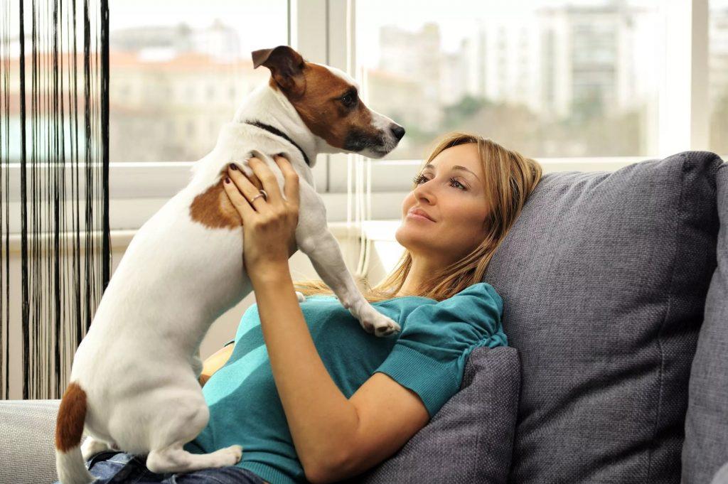 Топ-10 самых ленивых пород собак в рейтинге zuzako