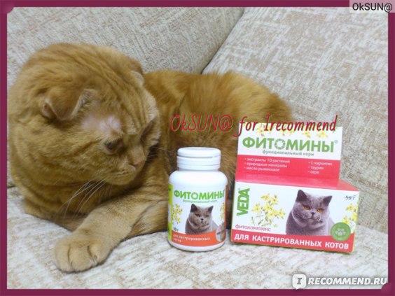 Лечение мочекаменной болезни у кошек   ветеринарная клиника «ветмед»