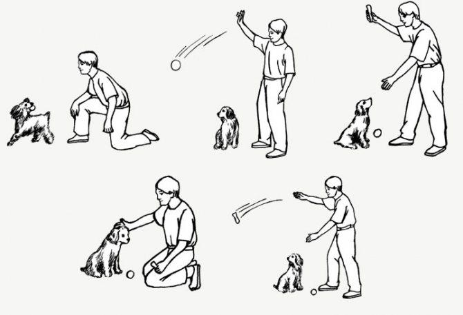 Как самостоятельно научить собаку команде «лежать»? —petstory