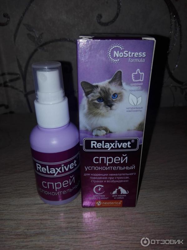 Успокоительное для кошек: капли, спрей, таблетки, уколы, отзывы
