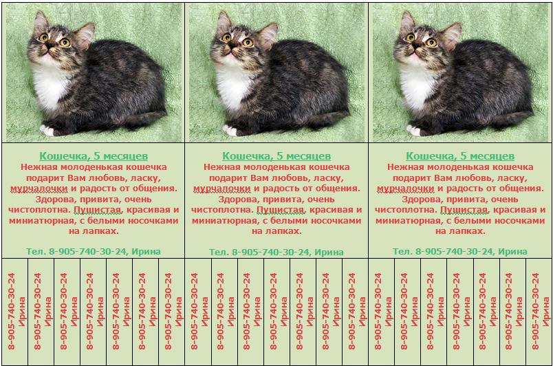 Как определить возраст котенка - wikihow
