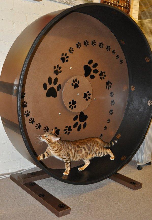 Беговое колесо для кошек своими руками
