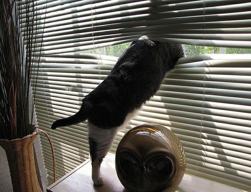 Что делают коты, когда нас нет дома: топ-10 популярных занятий