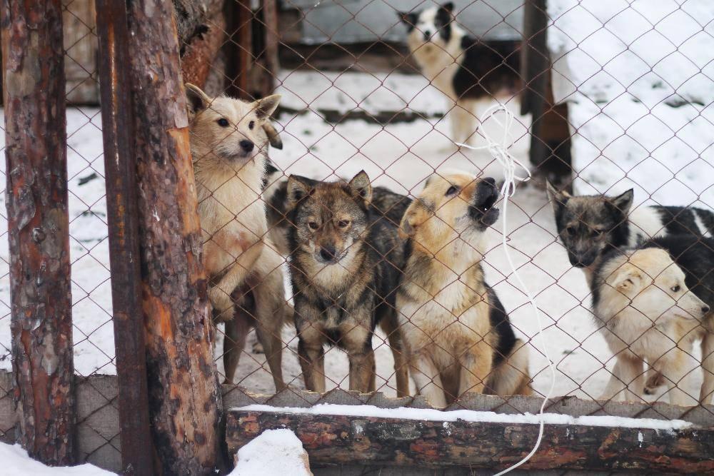 «собака бывает кусачей»: что делать, если водворе поселилась стая бездомных псов