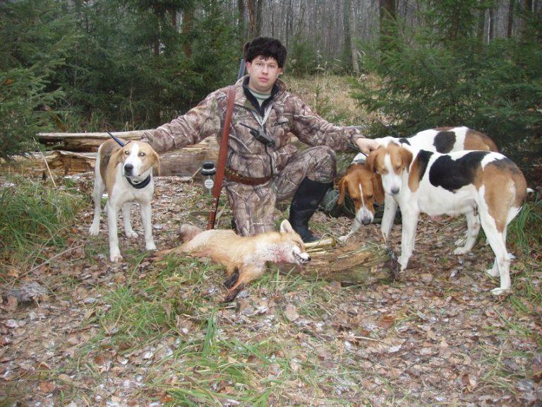 Нагонка гончих - охота и рыбалка, животные, туризм