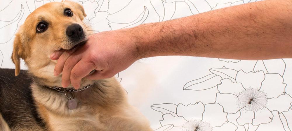 Как отучить собаку кусаться за руки и ноги, во время игры