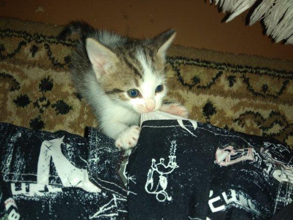 Инструкция по спасению котят: что делать с найденным на улице бездомным животным