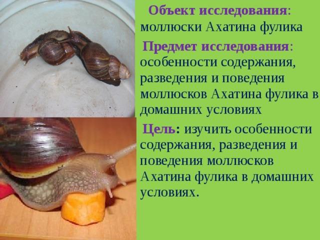 Что едят улитки и как их кормить в домашних условиях?