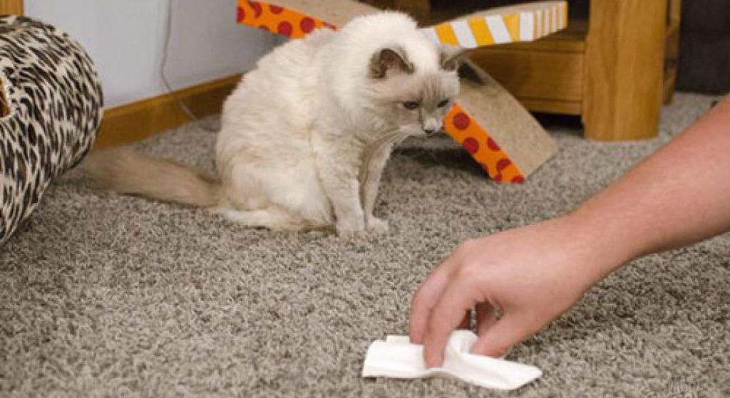 Как отучить кошку гадить в неположенном месте: народные средства, полезные советы, препараты, отзывы