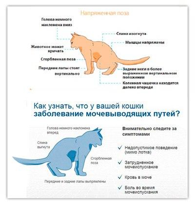 """Кормление при мочекаменной болезни струвитного типа у кошек. ветеринарная клиника """"зоостатус"""""""