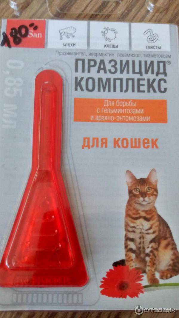 Блохи у кошек. как вывести, лучшие средства от блох: цены и отзывы