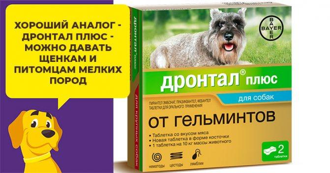 «тронцил-к» для кошек: способ применения, дозировка, противопоказания, отзывы