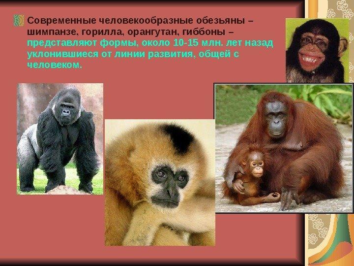 Семейство: hylobatidae = гиббоновые