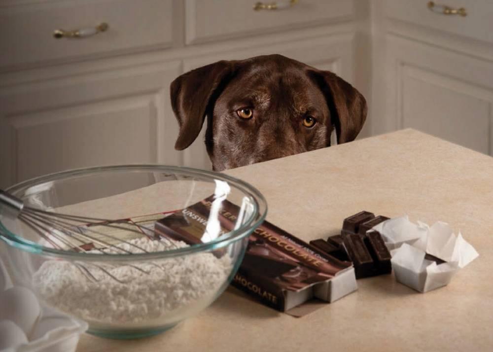 Можно ли собаке колбасу: почему нельзя, к чему может привести такая пища