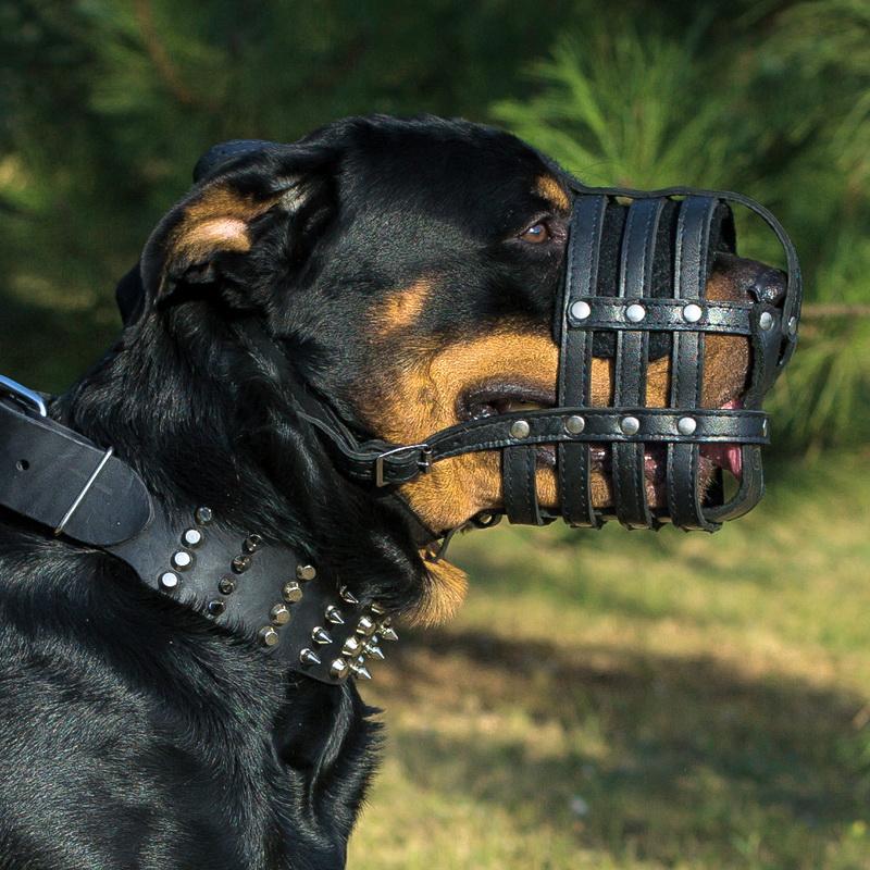 12 пород собак, которые идеально подходят для начинающих владельцев