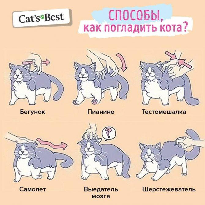 Почему кошка расстроена? Несколько вещей, которые испортят настроение любой кошке
