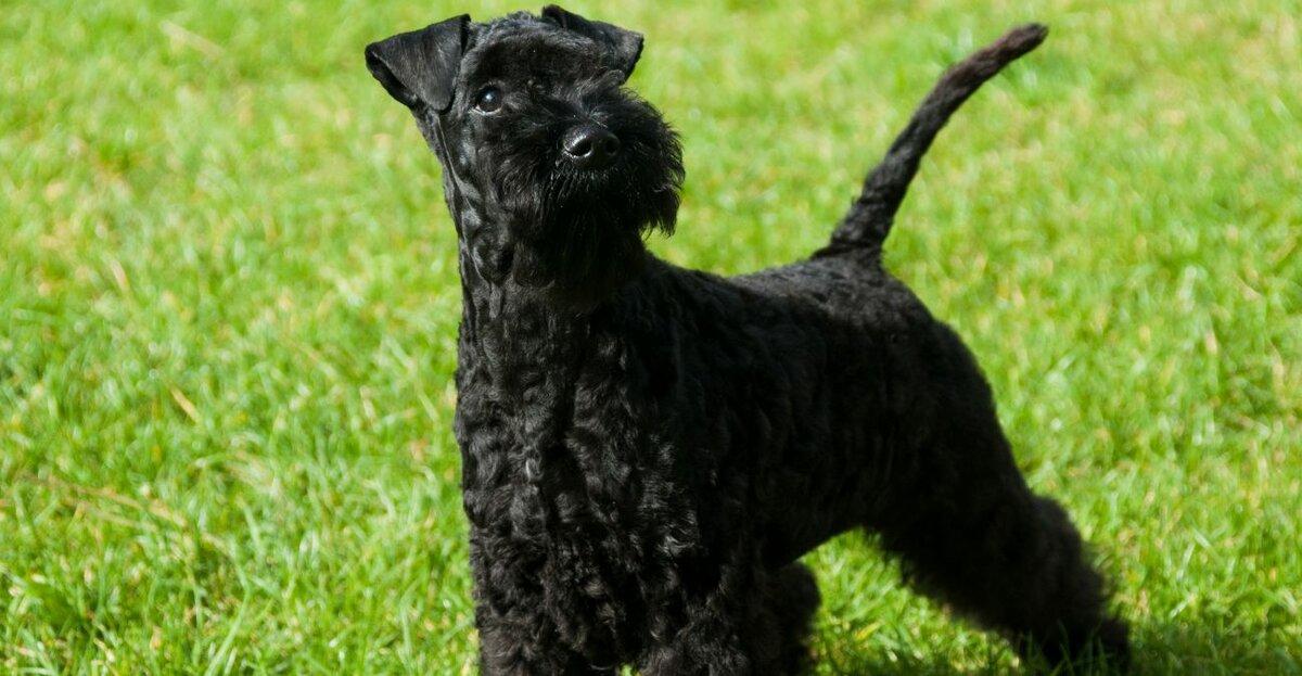 Не нравится, когда с собаки летит шерсть: выбираем питомцев, которые не линяют