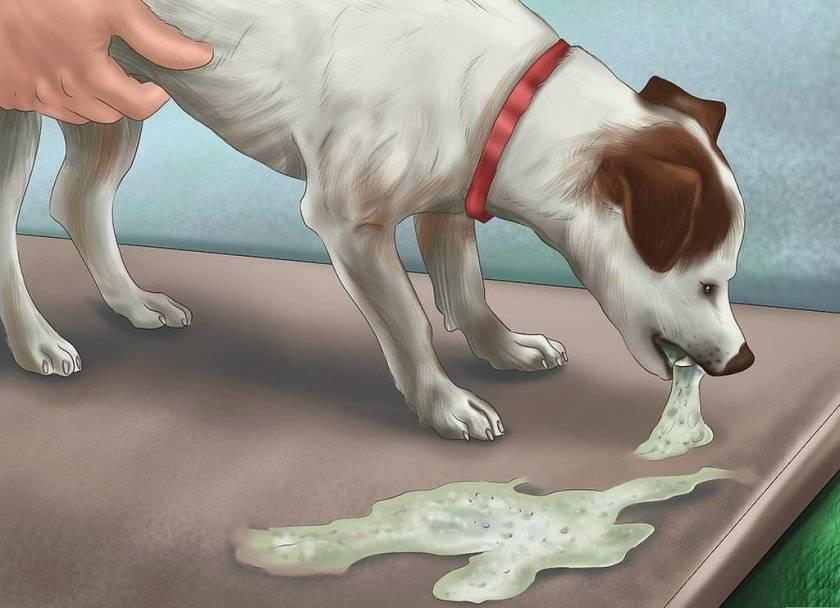 Рвота у собаки: что делать если у собаки рвота - здоровье животных   сеть ветеринарных клиник, зоомагазинов, ветаптек в воронеже