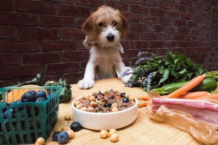 Можно ли давать кошачий корм собаке? что будет, если щенок съел корм для кошек - автор екатерина данилова - журнал женское мнение