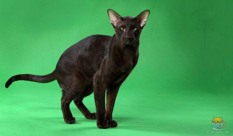Как ведет себя кошка после стерилизации и как за ней ухаживать?