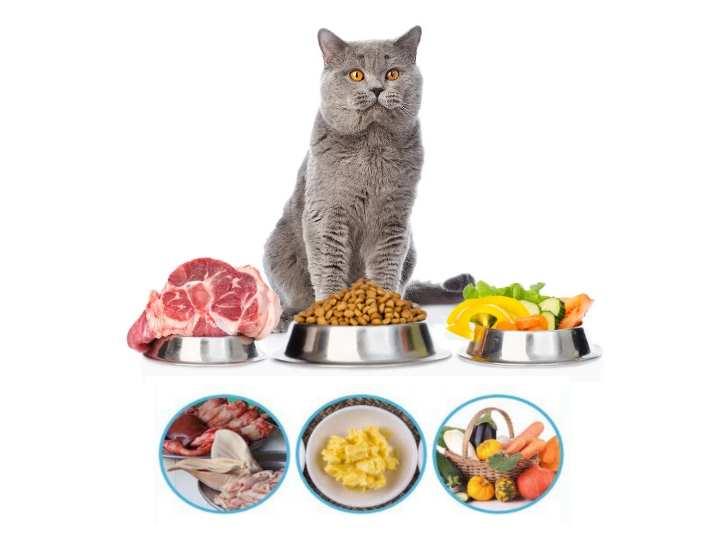 Чем кормить котенка домашней едой, что можно и категорически нельзя? чем кормить котенка: домашней пищей или сухим кормом? - автор екатерина данилова - журнал женское мнение