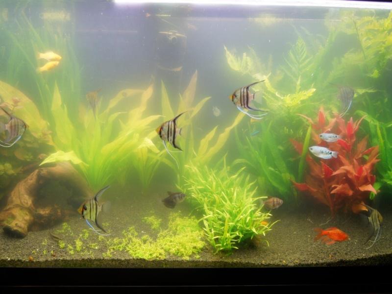 Мутная вода в аквариуме: причины и способы устранения проблемы