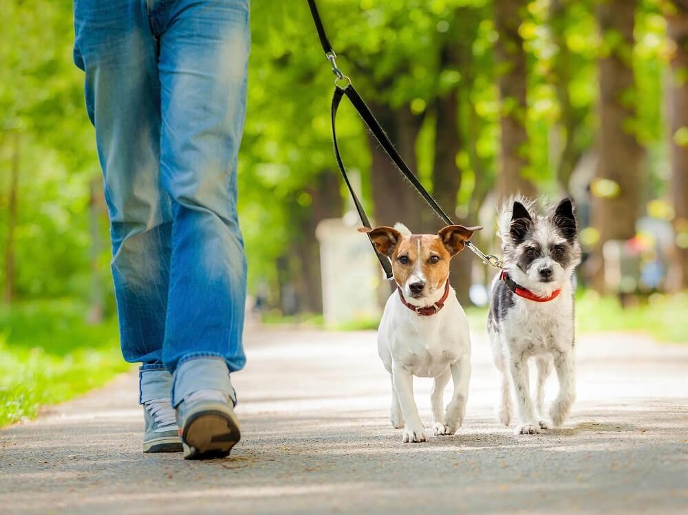 Как часто нужно выгуливать собаку: назначение и правила, длительность