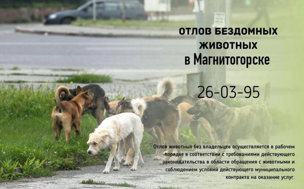 Куда можно обратиться по поводу отлова бродячих собак?