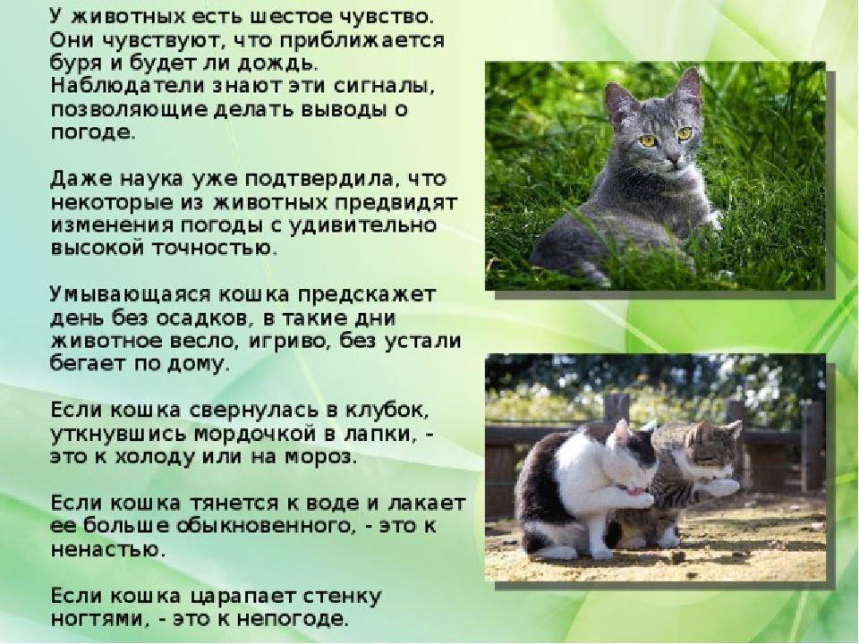 Предсказание погоды по животным – как определить погоду по кошке, собаке, домашним и диким птицам, насекомым, рыбкам, домашнему скоту