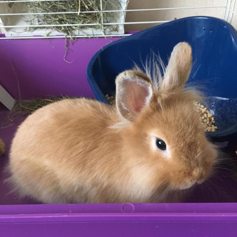 Сколько стоит кролик и его клетка в зоомагазине, питомнике и с рук (цена крольчат для разведения)