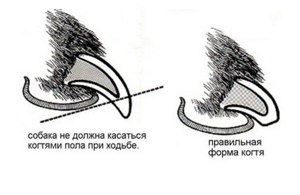 Как правильно и как часто нужно стричь когти йорку в домашних условиях без вреда собаке