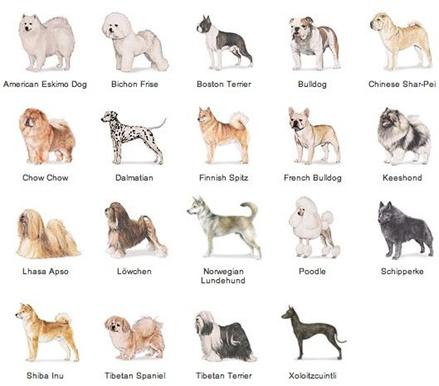 ᐉ как определить породу щенка по внешнему виду? - zoomanji.ru
