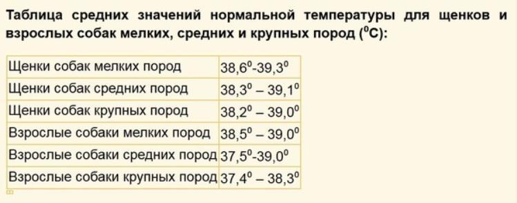 Температура тела у собаки в норме и при болезни