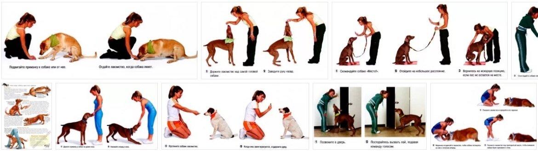 Как научить собаку команде лежать | как обучить, дрессировка, видео