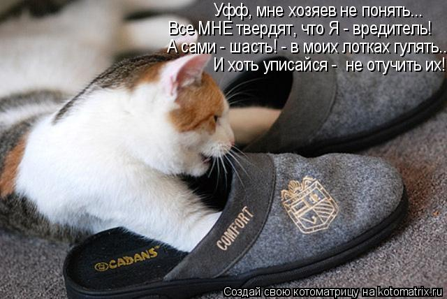 Как научить кошку принести тапочки