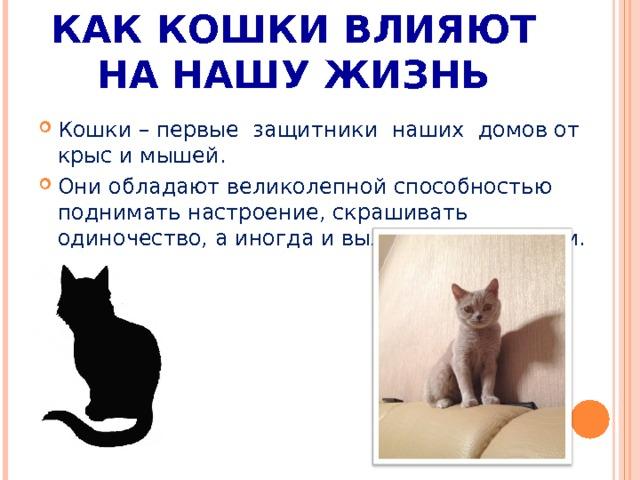 Лечат ли кошки людей от болезней и как: правда и мифы, отзывы