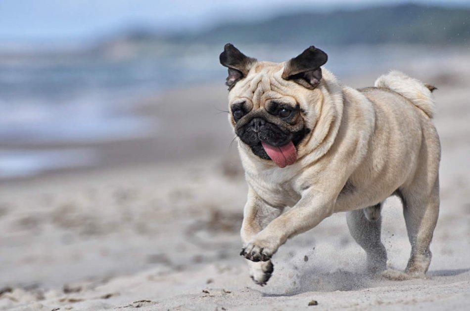 Самые смешные породы собак с фото