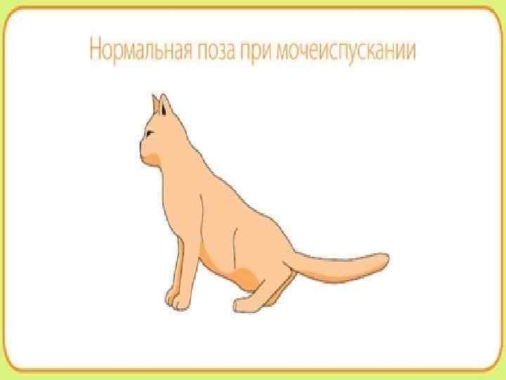 Мочекаменная болезнь у кошек: симптомы, профилактика, лечение, корм   зоомедик