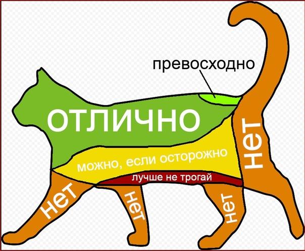 Как правильно гладить кошку: когда можно, приятные зоны