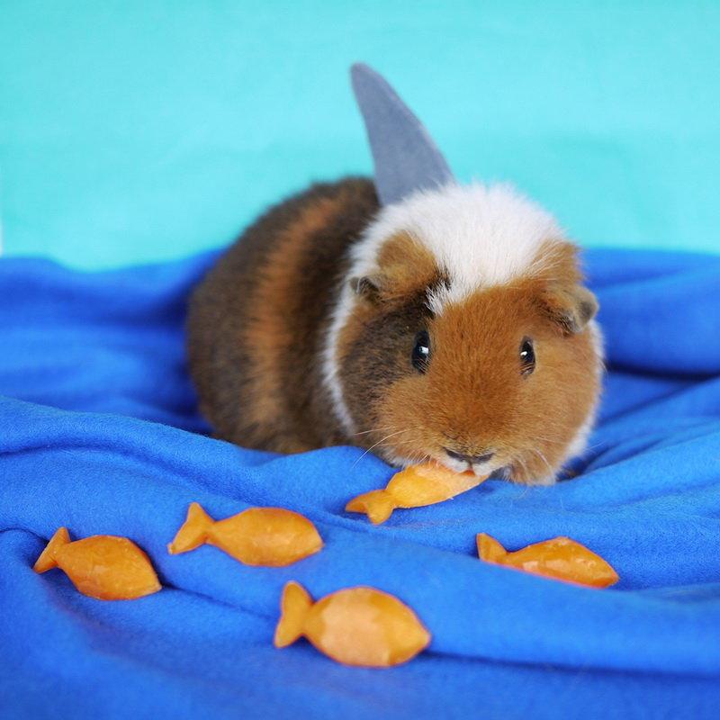 Можно морским свинкам нектарин