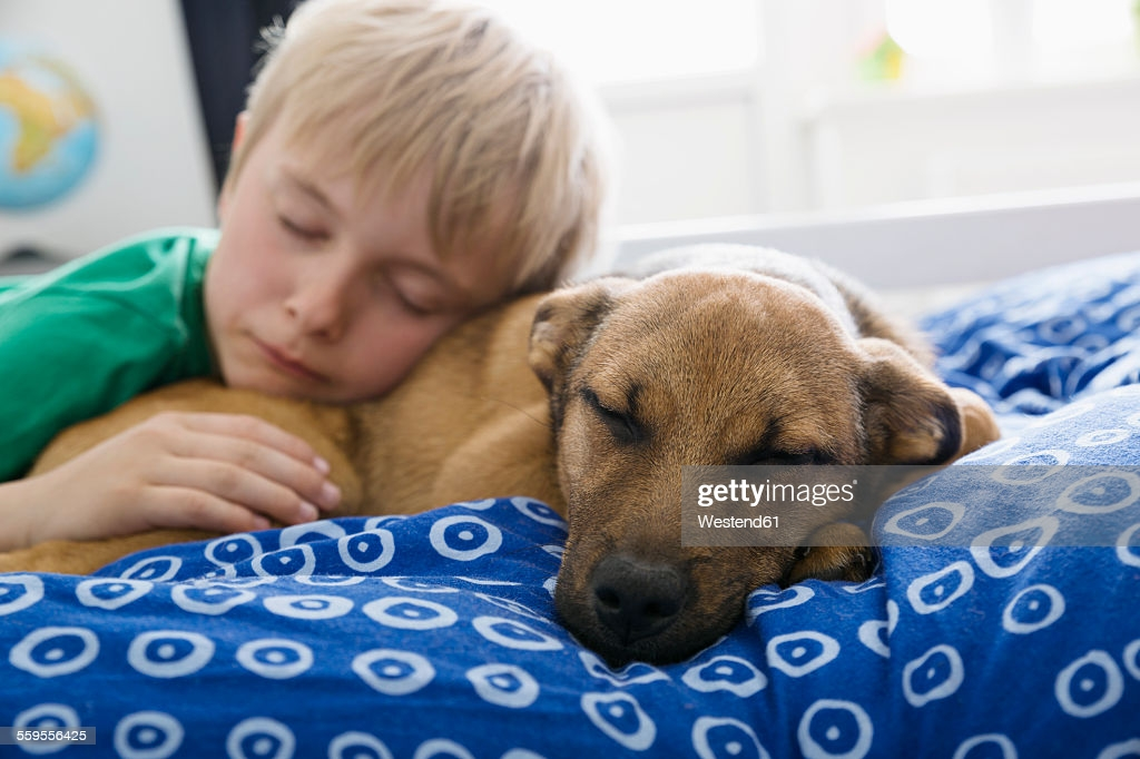 Как отучить собаку, щенка прыгать на хозяина, на знакомых ей людей: советы кинолога