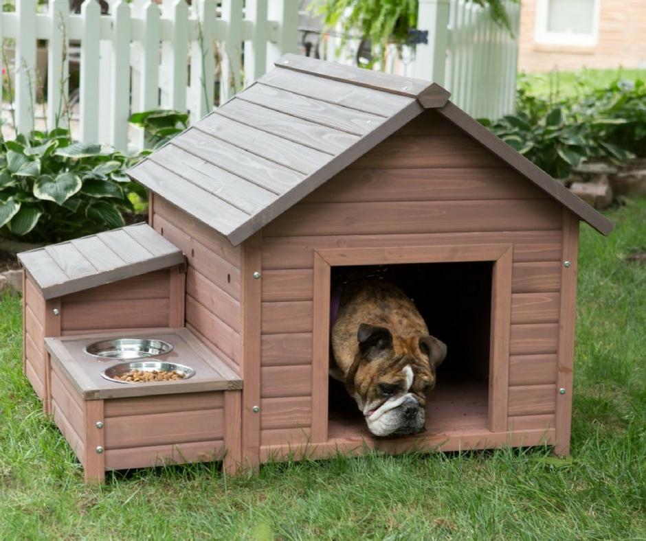 Как сделать своими руками теплую будку для собаки: пошаговая инструкция