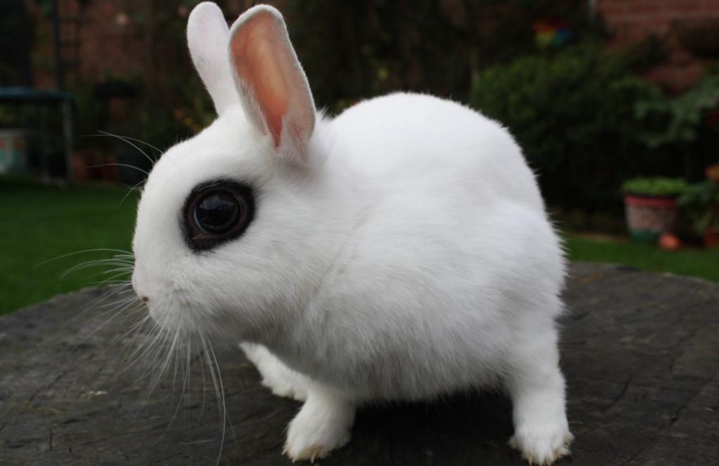 Красивые животные мира. фото и описание.