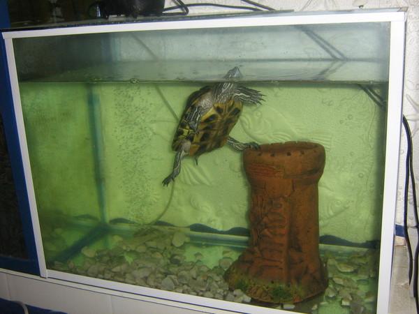 Как подготовить аквариум для черепахи: 12 шагов