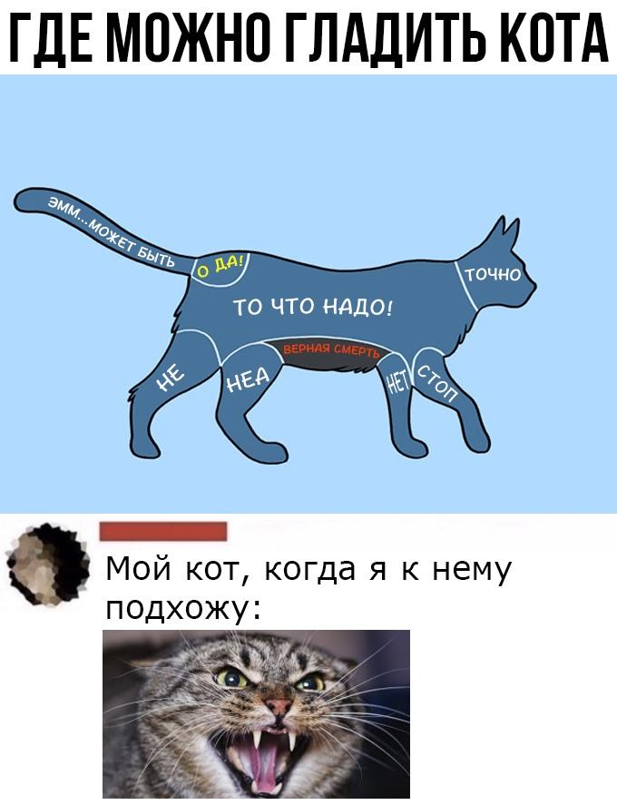 Как сделать кошку ласковой?